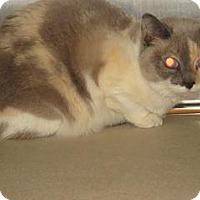 Adopt A Pet :: Puka - Wildomar, CA
