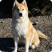 Adopt A Pet :: Rocky - Gardnerville, NV
