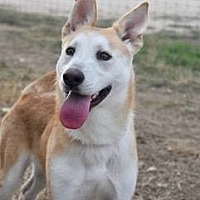 Adopt A Pet :: Cane - Clifton, TX