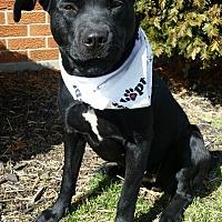 Adopt A Pet :: Penelope - Wapakoneta, OH
