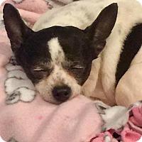 Adopt A Pet :: Myrtle - Aiken, SC