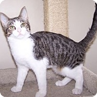 Adopt A Pet :: K-Herrley2-Priscilla - Colorado Springs, CO
