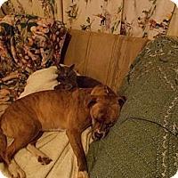 Adopt A Pet :: Gretchen - Normandy, TN