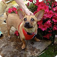 Adopt A Pet :: Maddi is very cuddly! - Redondo Beach, CA
