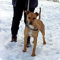 Adopt A Pet :: Kirby - Tinton Falls, NJ