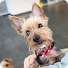 Adopt A Pet :: Nexxus