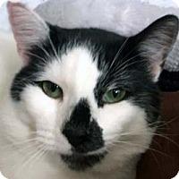 Adopt A Pet :: Simon - Tiburon, CA