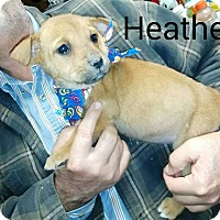 Adopt A Pet :: Heather - Trenton, NJ
