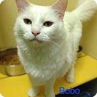 Adopt A Pet :: Bobo - Baton Rouge, LA