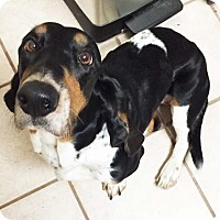 Adopt A Pet :: Lady - Dallas/ Ft. Worth, TX