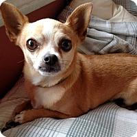 Adopt A Pet :: Bif - San Diego, CA