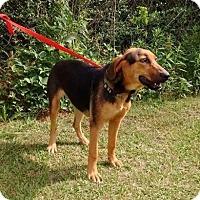 Adopt A Pet :: Zena-LOCAL - Lebanon, ME