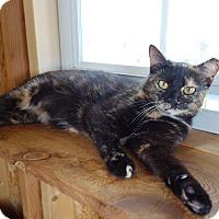 Adopt A Pet :: Sonia - Waller, TX