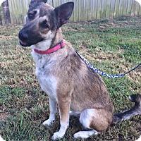 Adopt A Pet :: Valory - Greeneville, TN