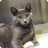 Adopt A Pet :: Jax - Grants Pass, OR