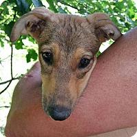 Adopt A Pet :: Karmel - Medora, IN
