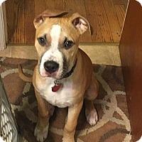 Adopt A Pet :: Sawyer - Grand Rapids, MI
