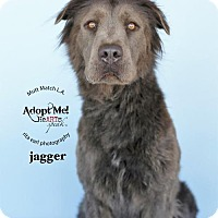 Chow Chow/German Shepherd Dog Mix Dog for adoption in Castaic, California - Jagger