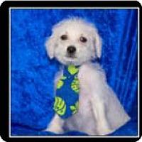 Adopt A Pet :: Deb, Flo and Jaques - Imperial Beach, CA