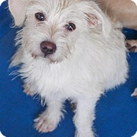 Adopt A Pet :: Penny - Helotes, TX