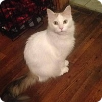 Adopt A Pet :: Ruby - Xenia, OH