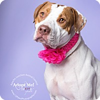 Adopt A Pet :: Hannah - Apache Junction, AZ