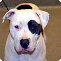 Adopt A Pet :: Charlotte - Wildomar, CA