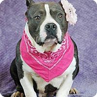 Adopt A Pet :: Mia - West Springfield, MA