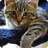 Adopt A Pet :: Joy - Summerville, SC