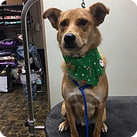 Adopt A Pet :: Rusty - Rockwall, TX