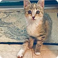 Adopt A Pet :: Miss Riley - Orlando, FL