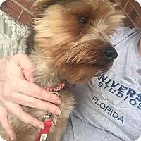Adopt A Pet :: Jo Jo - Adoption Pending! - Ascutney, VT