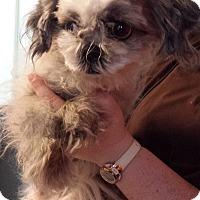 Adopt A Pet :: Mabel - Westminster, CA