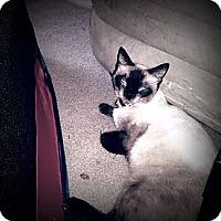 Adopt A Pet :: Meeka - Richmond, VA