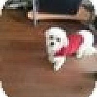 Adopt A Pet :: Leroy - Northumberland, ON