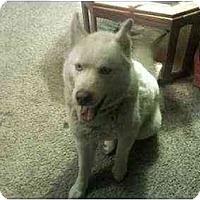 Adopt A Pet :: Luke--CAT OK! - Belleville, MI
