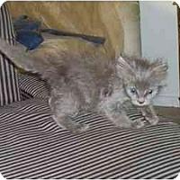 Adopt A Pet :: Olive - Davis, CA