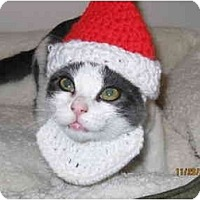 Adopt A Pet :: Beau - Catasauqua, PA