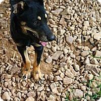 Adopt A Pet :: Farrah and Fanta - Linden, TN