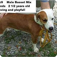 Adopt A Pet :: # 346-09 @ Animal Shelter - Zanesville, OH