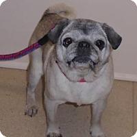 Adopt A Pet :: Beth - Gary, IN
