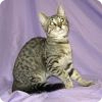 Adopt A Pet :: Sonny - Powell, OH