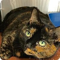 Adopt A Pet :: Maxine - Webster, MA