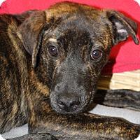 Adopt A Pet :: Clyde - Waldorf, MD