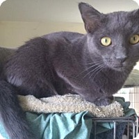 Adopt A Pet :: Sylvia - Devon, PA