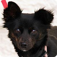 Adopt A Pet :: Noel - Palmdale, CA