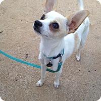Adopt A Pet :: PeeWee - Fullerton, CA