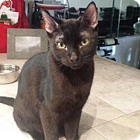 Adopt A Pet :: Sigmund - Mission Viejo, CA