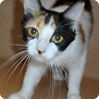 Adopt A Pet :: Cynthia - Chattanooga, TN