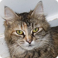 Adopt A Pet :: Missy - North Branford, CT